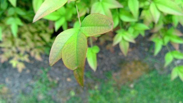 Nokia 1020 Leaf Closeup