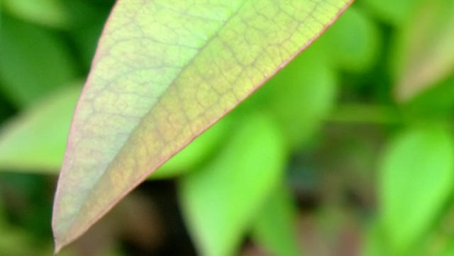 lumia-1020-leaf-zoom
