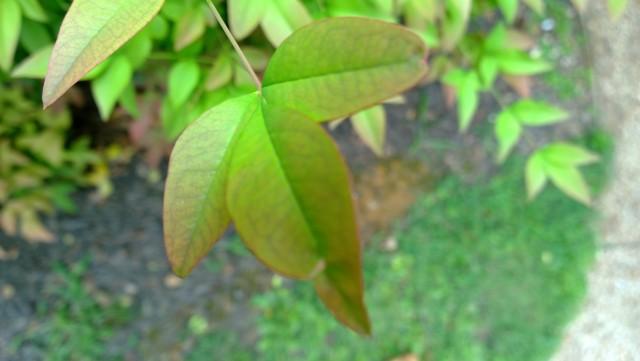 nokia-1020-leaf-highres
