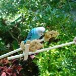 lumia-1020-bird-feeder